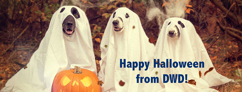 Funny dogs / halloween!